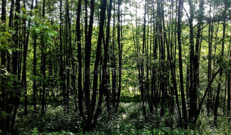 森林的阴影 免版税库存照片