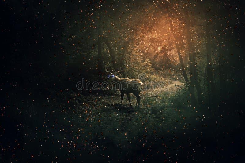 很多萤火虫和闪闪发光的黑暗的森林 神秘的野生场面屏幕保护程序 雄鹿