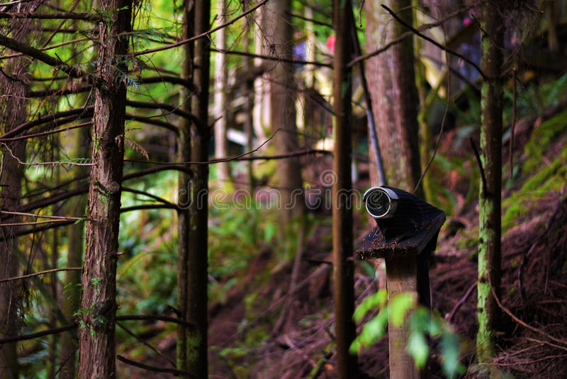 森林监视 库存图片