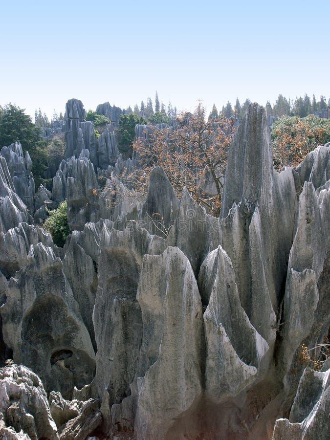 森林石头 免版税库存图片