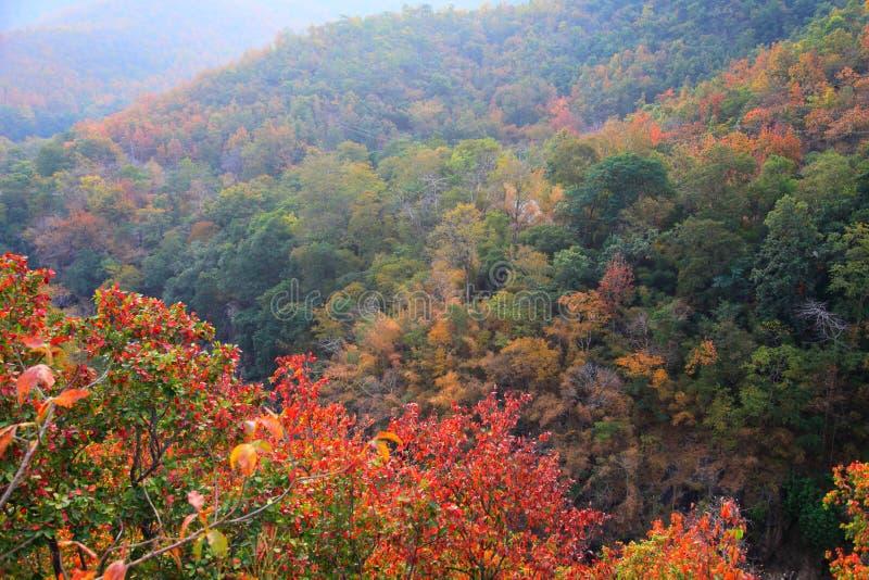 森林秋天改变在山的秋季期间的叶子颜色风景  图库摄影