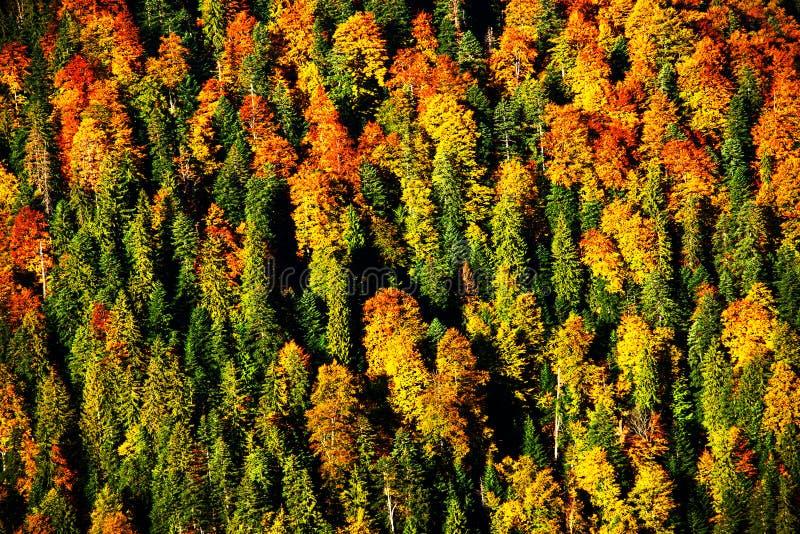 森林秋天横向 库存图片