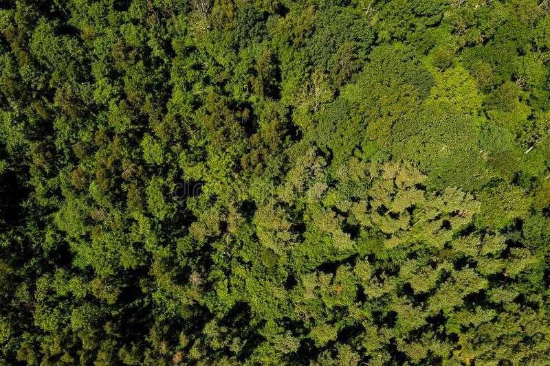 森林空中射击  免版税图库摄影
