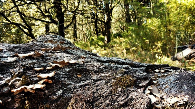 森林纹理 库存照片