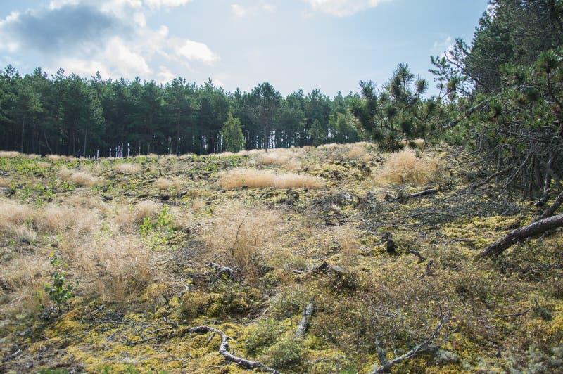 森林绿叶 库存照片