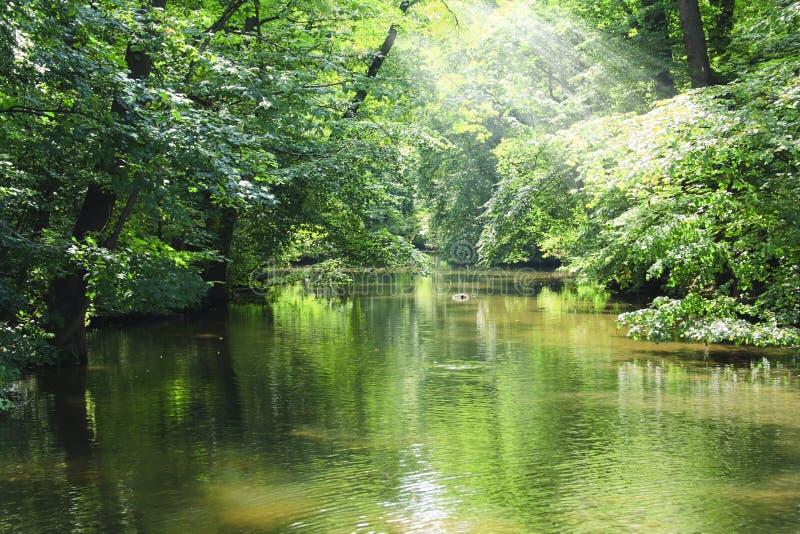 森林绿河 免版税库存照片