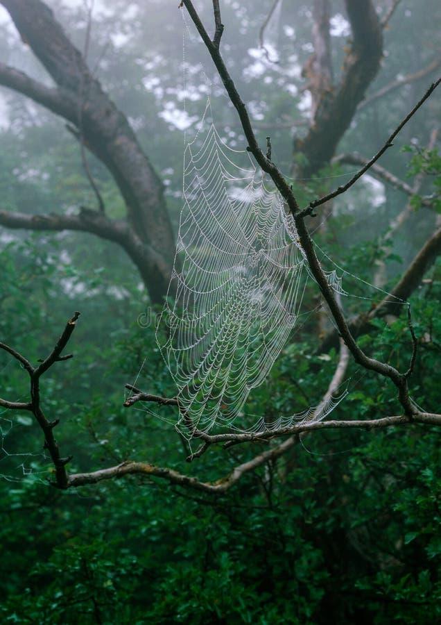 森林网 库存照片