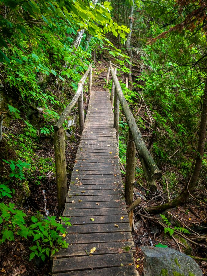森林老木头走的桥梁 免版税库存照片