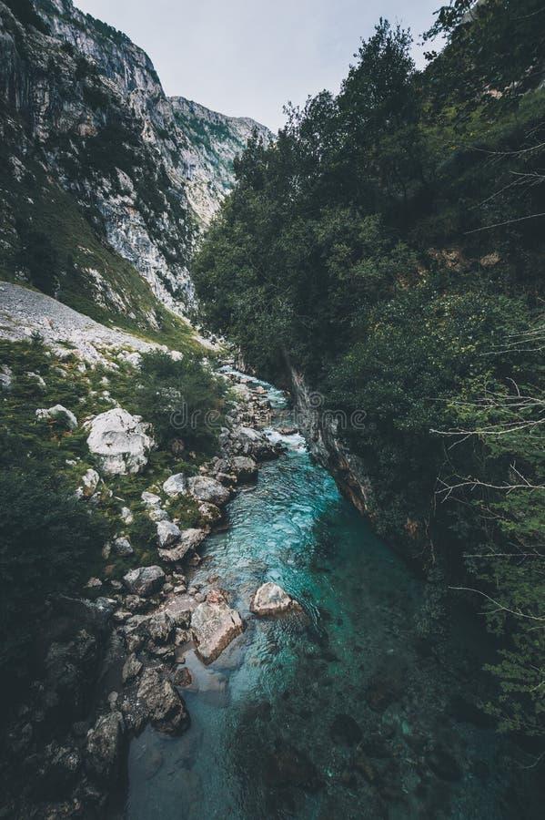 森林自然的美丽的河 平安的被定调子的自然背景 库存照片
