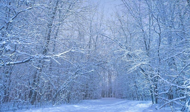 森林自然风景冷的天 免版税库存图片