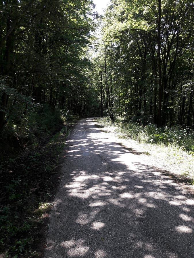 森林自行车路 库存照片