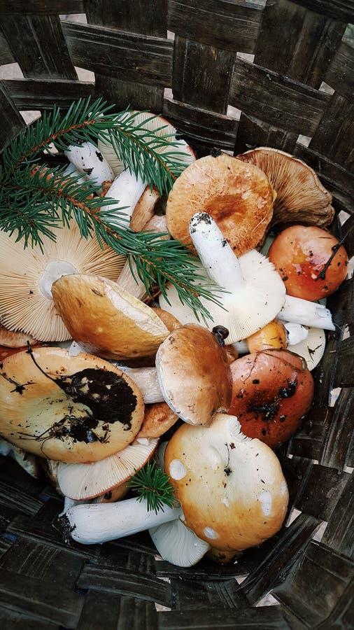 森林蘑菇的混合从篮子的森林带来的,乡下生活 库存照片