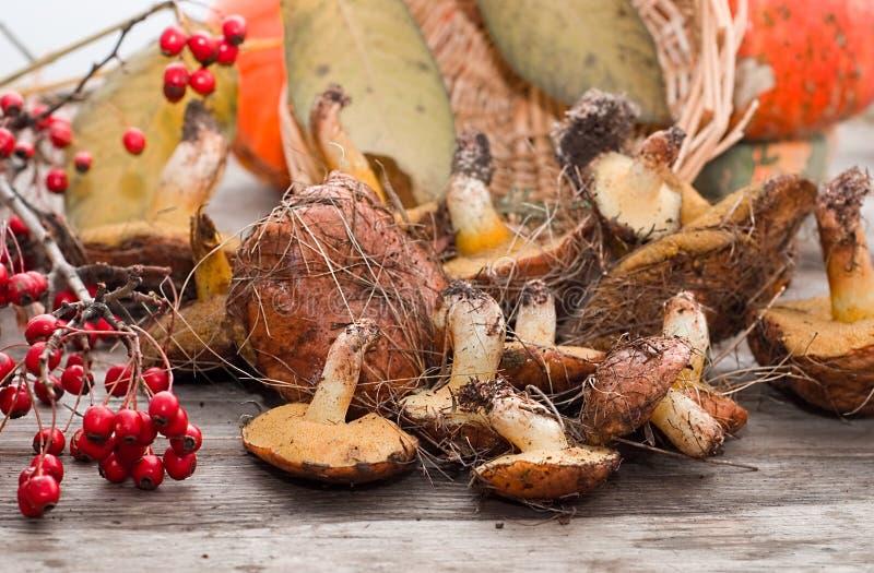森林蘑菇的混合 免版税图库摄影