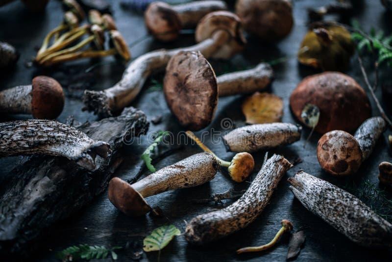 森林蘑菇,土气样式 图库摄影