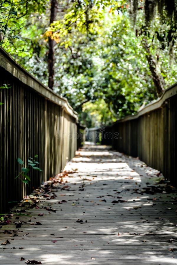 森林蜜饯道路 库存照片
