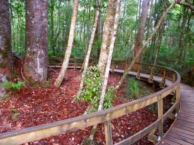 森林贝壳杉结构树waipoua 免版税库存照片