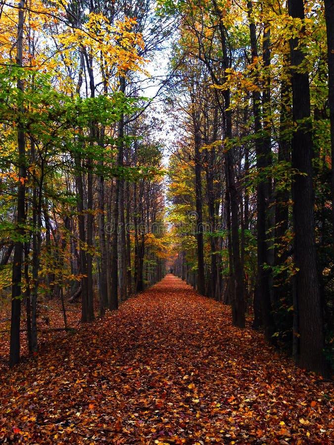 森林足迹和下落忘记马里兰大学 库存图片