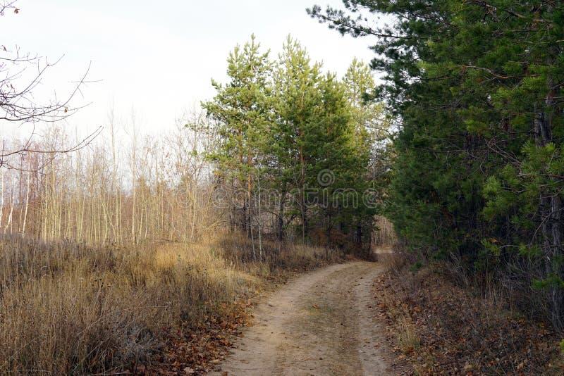 森林足迹在晚秋天,阴暗天 免版税库存图片