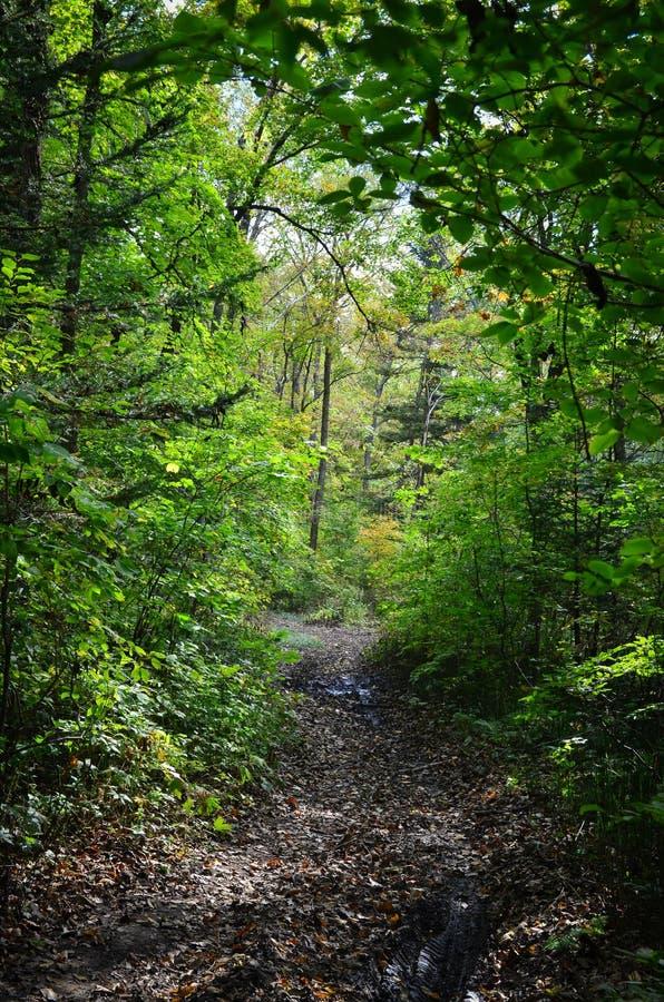 森林足迹, Primorye,俄罗斯 免版税库存照片