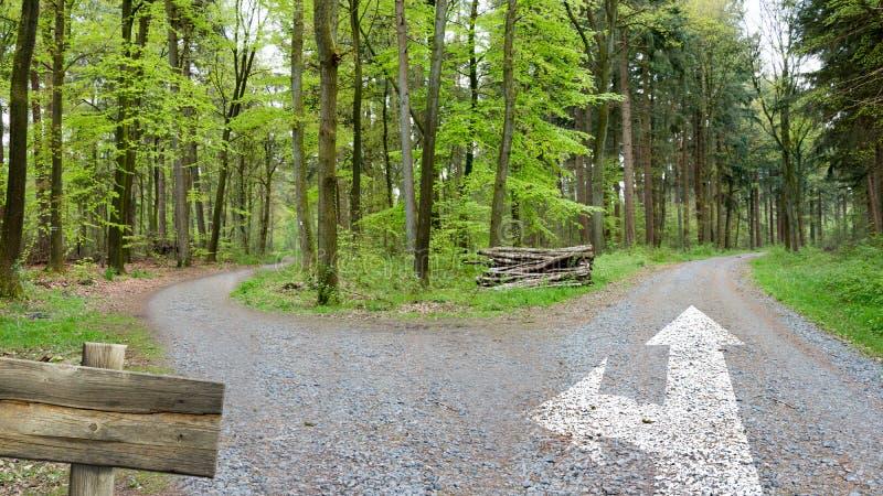 森林足迹-决定道路  库存图片