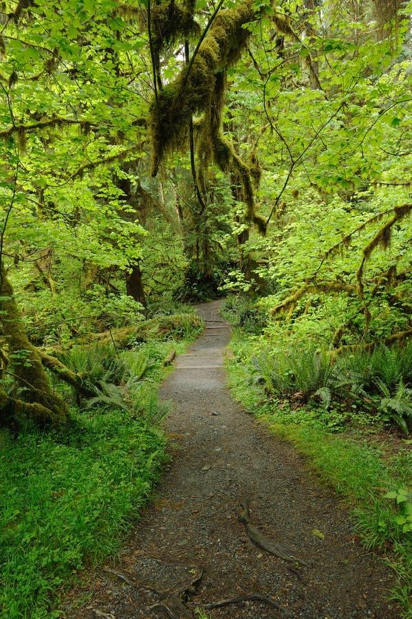 森林路径雨 库存照片