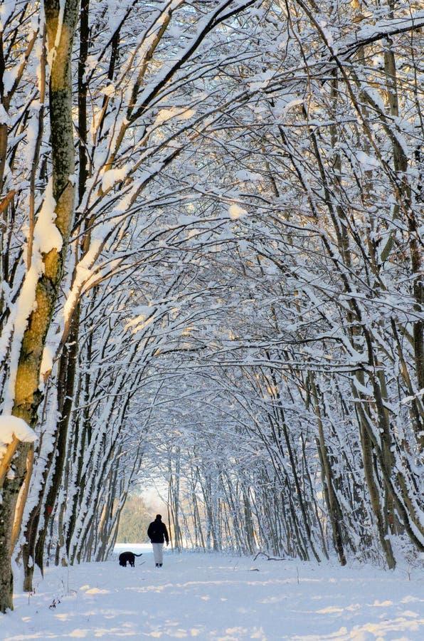 森林路径雪冬天 免版税库存照片