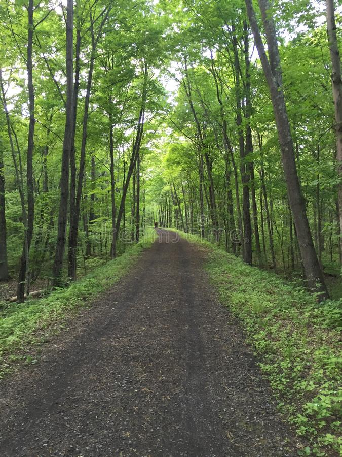 森林路2 图库摄影