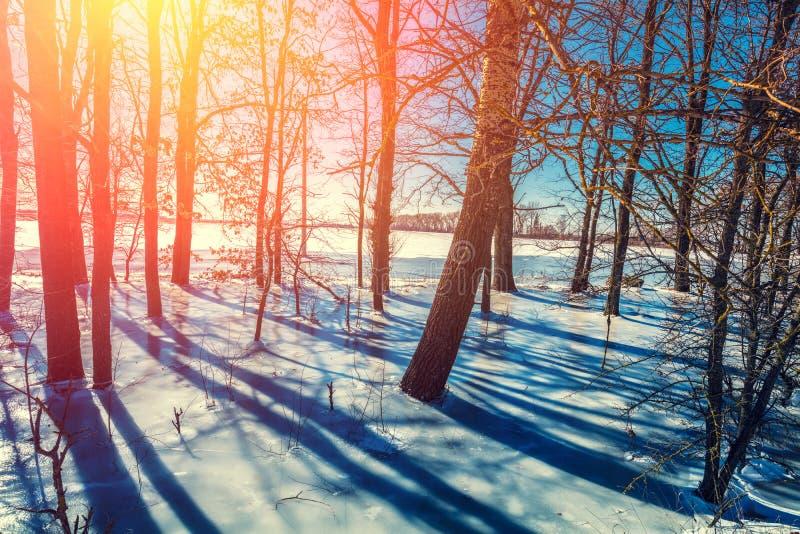 森林边缘在冬天 洪泛区森林 免版税库存照片