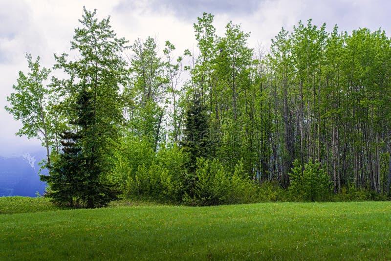 森林边缘-草甸遇见森林 免版税库存图片