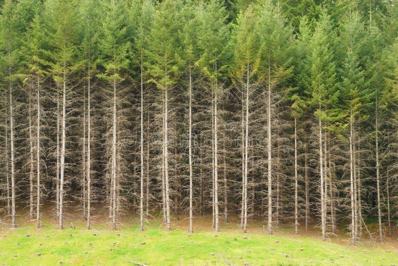 森林边缘 免版税库存图片