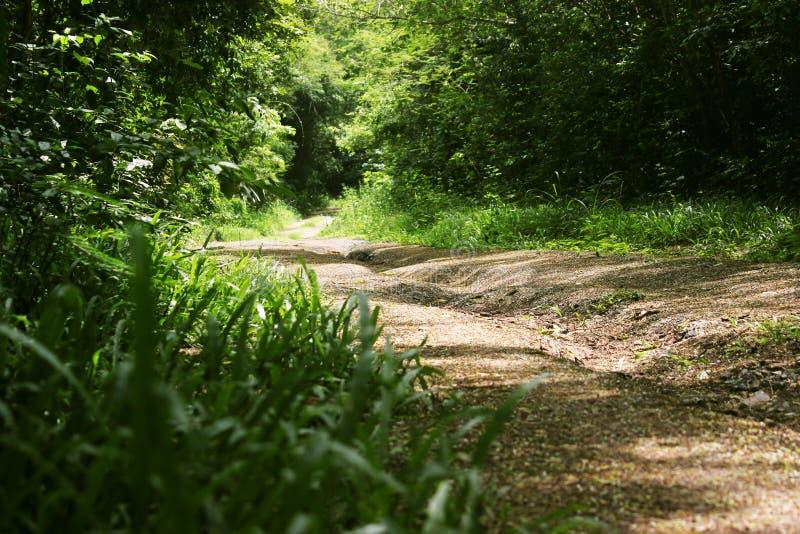 森林边路 免版税库存照片