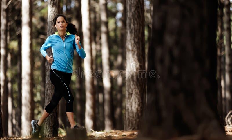 森林运行中线索 免版税库存图片