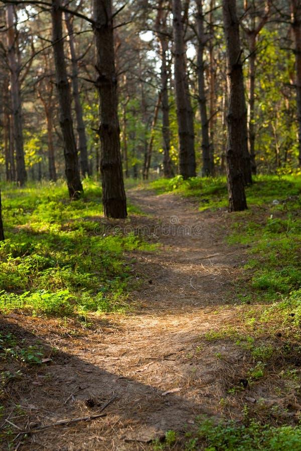 森林运输路线运行中 免版税库存照片