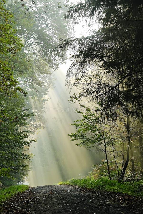 森林运输路线 库存照片