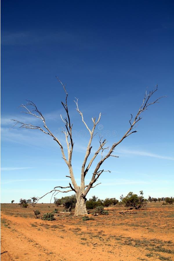 森林远期雨 免版税库存图片
