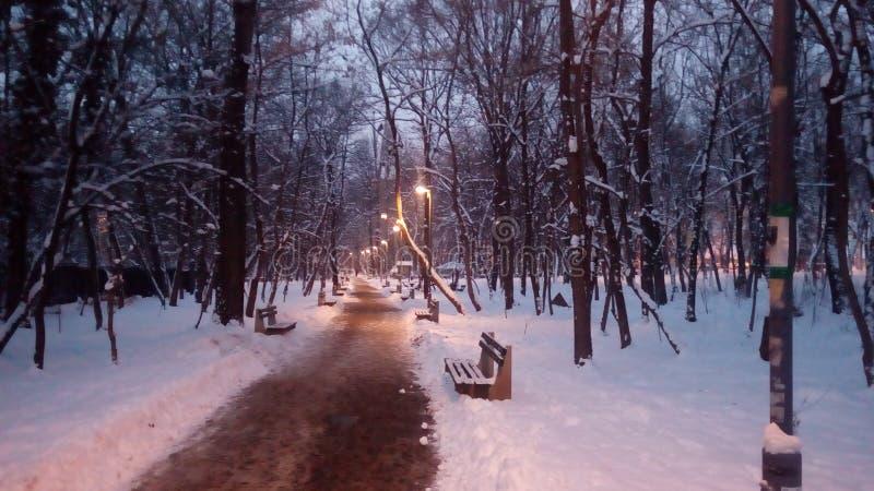 森林道路冬天 免版税图库摄影