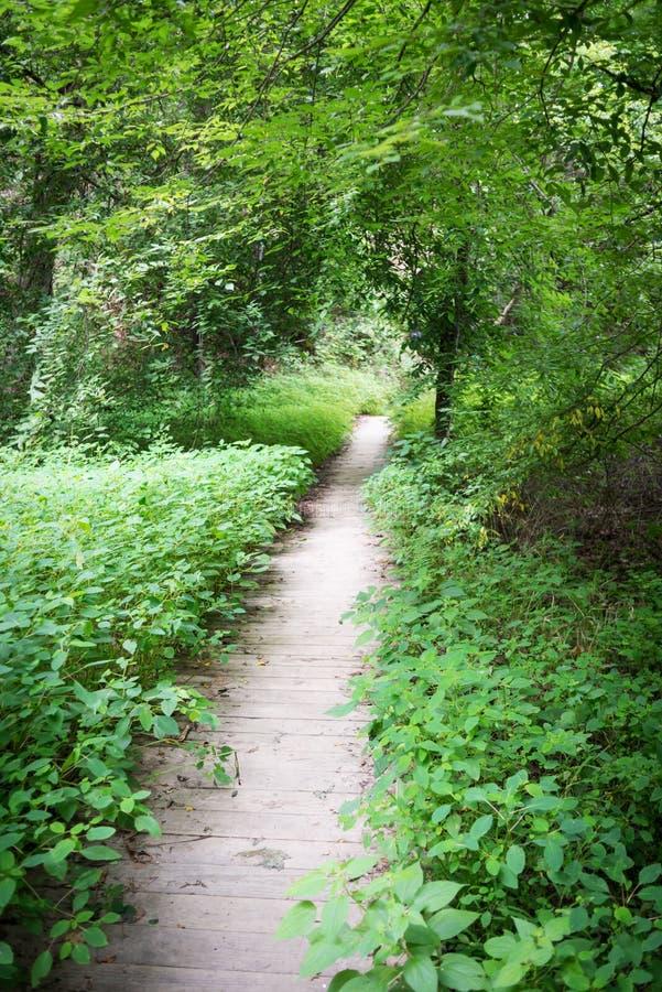 森林道路在成拱形的树下 库存照片