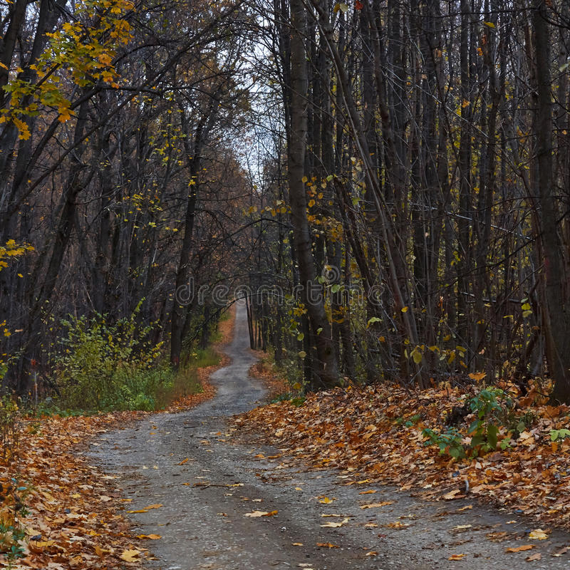 绕森林道路在秋天森林里 免版税库存图片