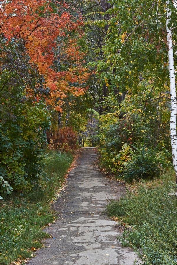 绕森林道路在秋天落叶林里 库存照片