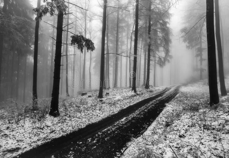 森林道路穿过冬天山毛榉森林 免版税库存图片