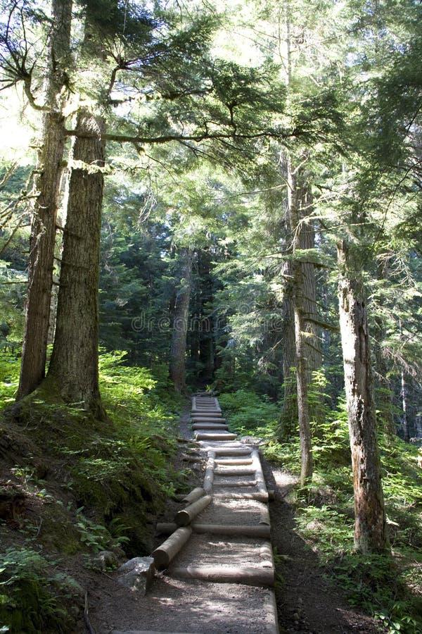 森林道路足迹 免版税库存照片