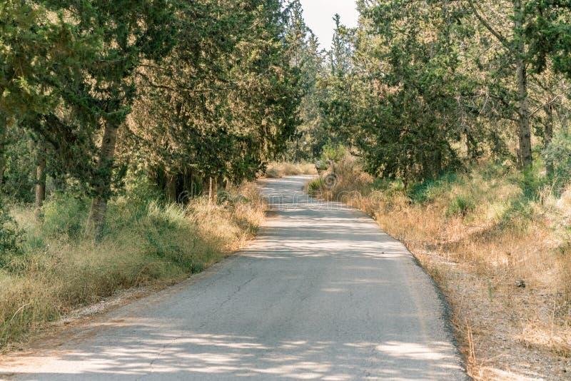 森林道路,风景自然风景 免版税库存照片