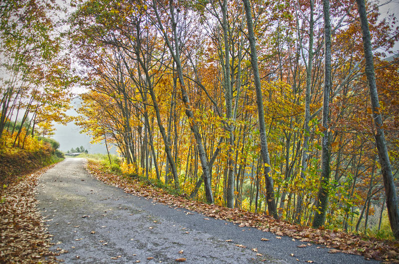 森林道路 免版税图库摄影