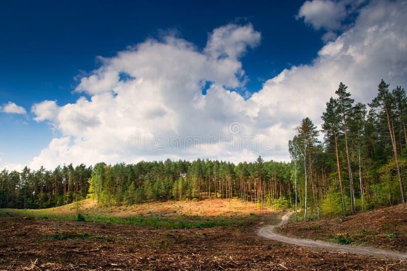 森林道路3 免版税库存图片