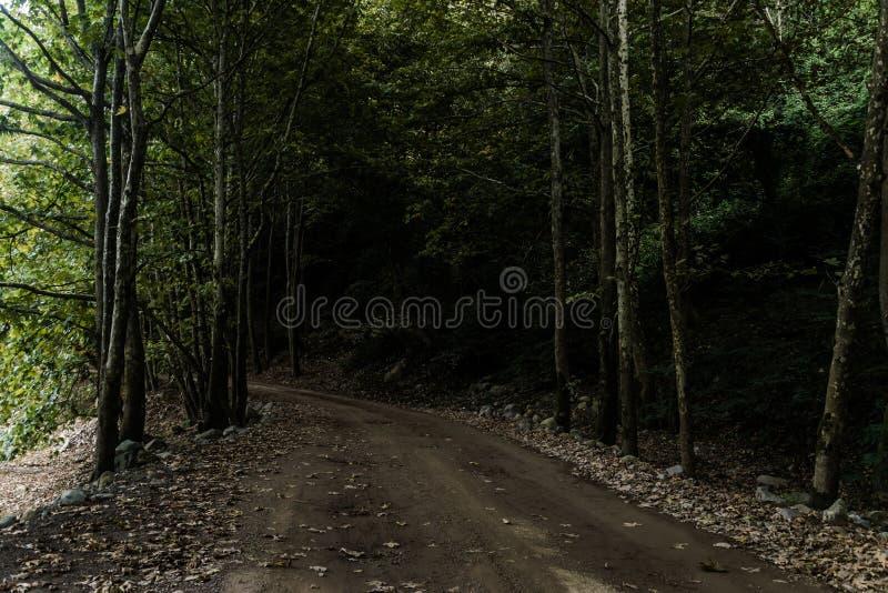 森林酸值mak路 图库摄影