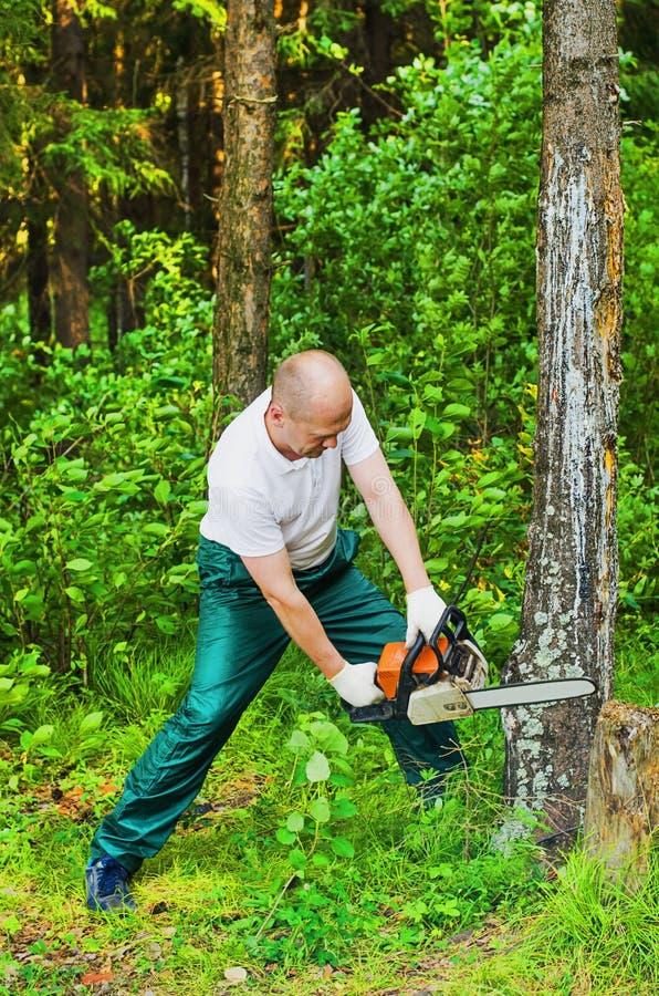 森林锯切木头的人与锯 库存照片