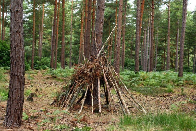 森林阵营 库存照片