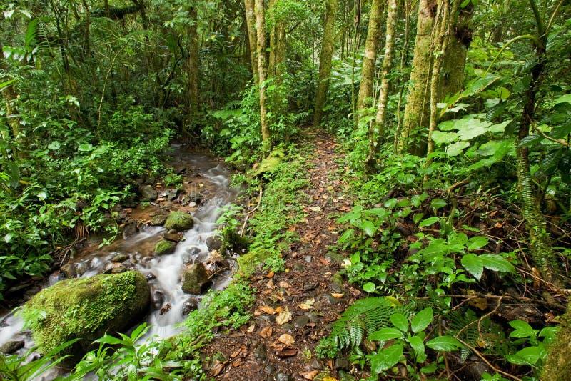 森林雨流 免版税库存照片