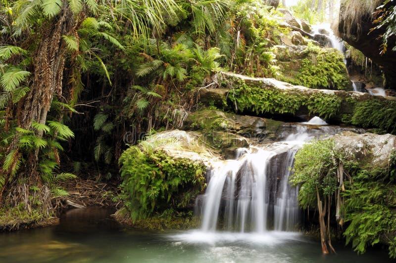 森林雨瀑布 免版税库存图片