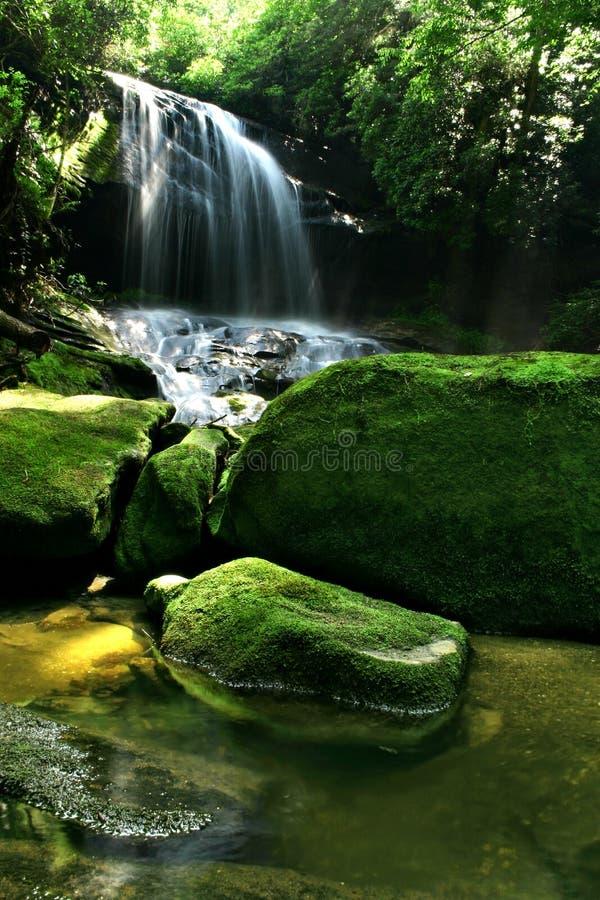 森林雨瀑布 库存照片